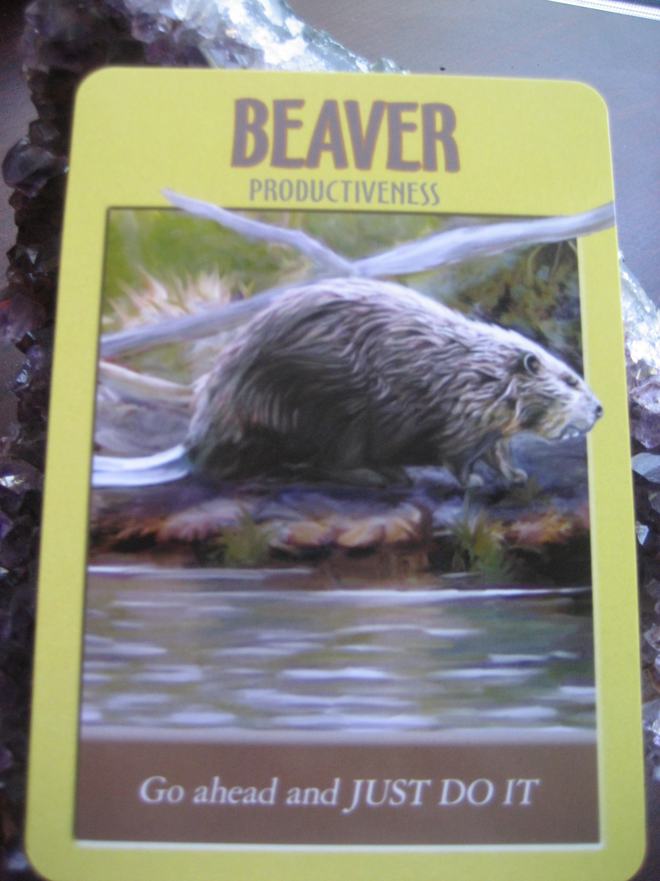 Power Animal of the Week – BEAVER
