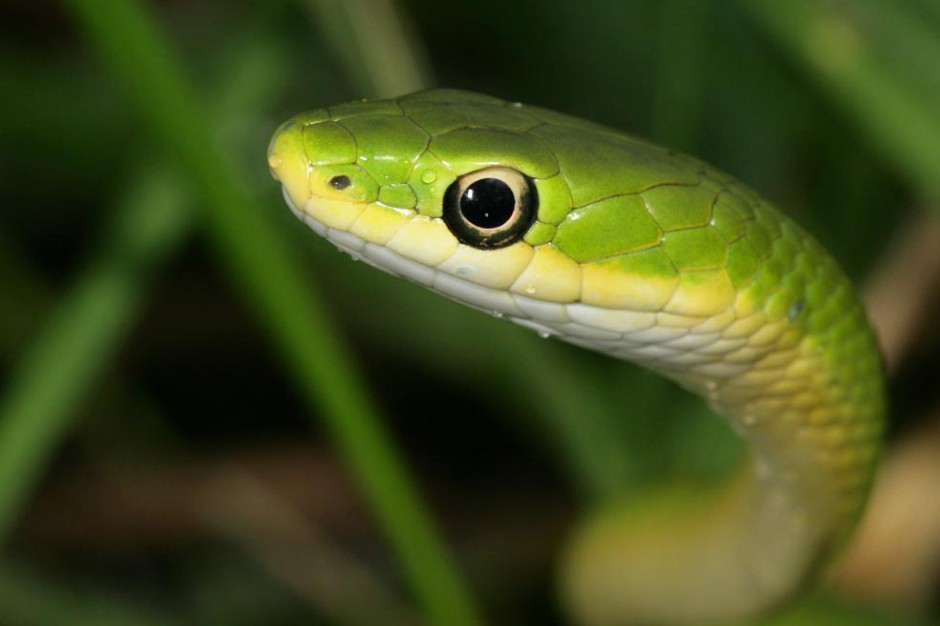 Power Animal of the Week – Snake