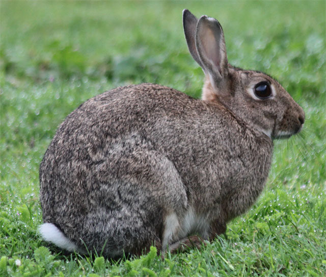 Power Animal of the Week – Rabbit