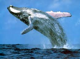 Power Animal of the Week – WHALE