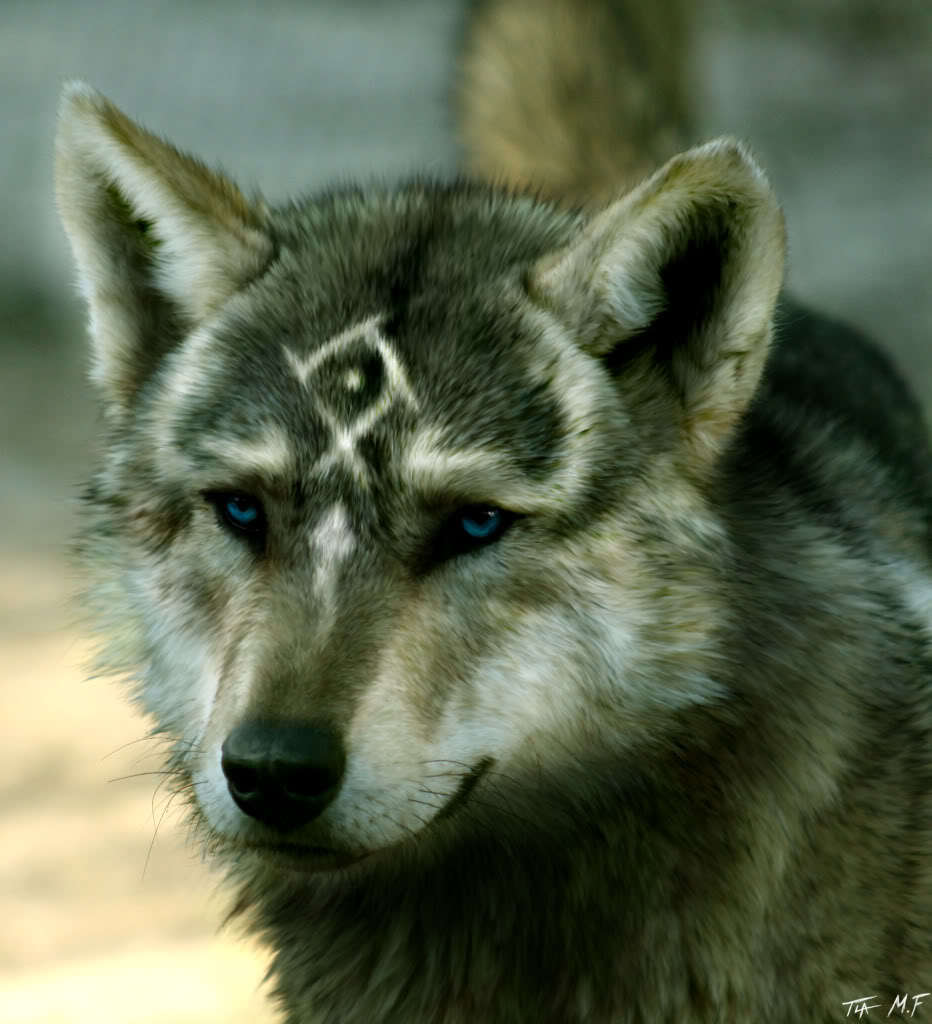Power Animal of the Week – WOLF