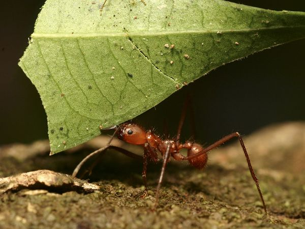 Power Animal of the Week – ANT