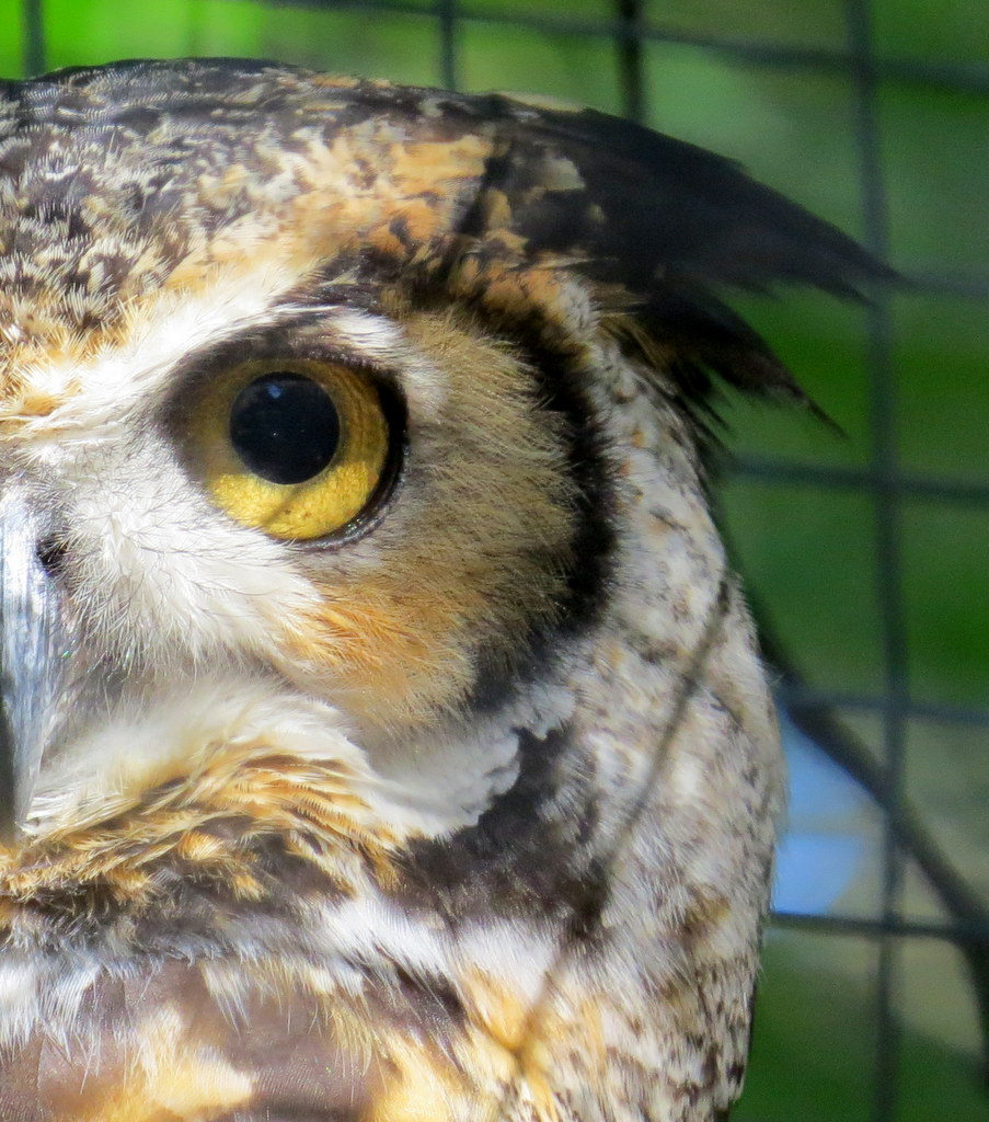 Power Animal of the Week – OWL