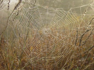Weaving Our Web of LOVE